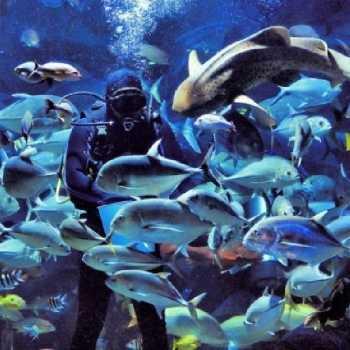 under-water-zoo-08-01
