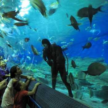 under-water-zoo-08-04