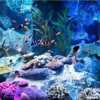 under-water-zoo-08-06